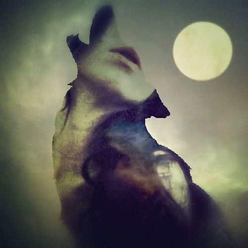 Un fiuto da lupe